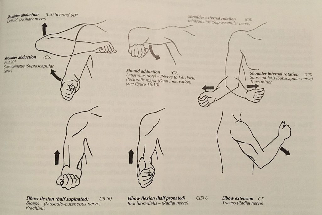 muscles & motions