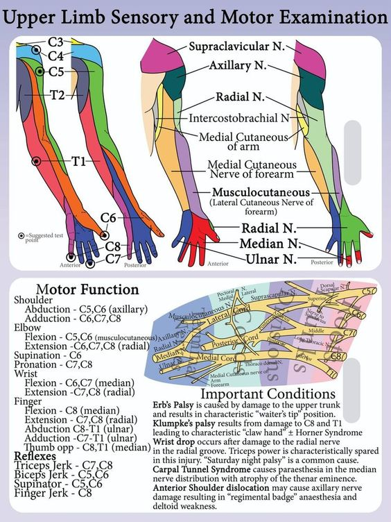 upper limb neurology